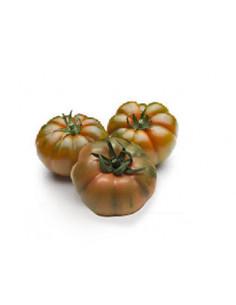 Pomodoro marinda cat 1^ Italia